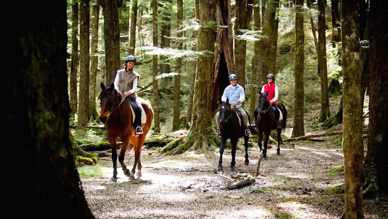 Horse Trek in Paradise, Tourism New Zealand