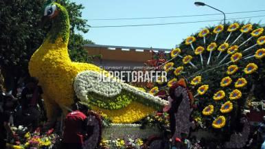 Surabaya Peacock Float, Culture Parade and Flower Carnival, Surabaya